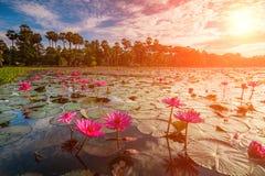 Dawn στη λίμνη με τα lotuses Στοκ φωτογραφία με δικαίωμα ελεύθερης χρήσης