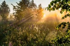 Dawn στον τομέα Στοκ Εικόνα