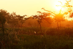 Dawn στο δάσος Στοκ Εικόνες