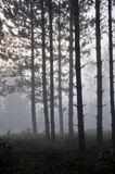 Dawn στο δάσος Στοκ Φωτογραφία