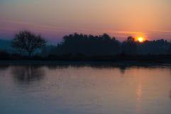 Dawn στο νέο δάσος στοκ εικόνες