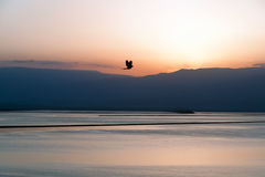 Dawn της νεκρής θάλασσας στοκ φωτογραφία με δικαίωμα ελεύθερης χρήσης