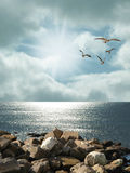 Dawn. With gulls in the coast Stock Images