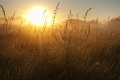 Dawn. Amazing sunrise on the summer meadow Stock Image