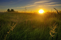 Dawn. Amazing sunrise on the summer meadow Stock Photo