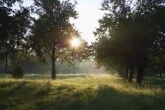 Dawn in the apple garden Royalty Free Stock Photos