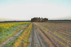 Dawn in the autumn field Royalty Free Stock Photography