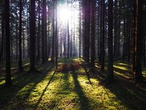Dawn in autumn forest. Beautiful nature is illuminated by sunlight. Details and close-up. royalty free stock photo