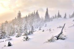 Dawn in berg op sneeuw Stock Afbeeldingen