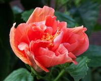 Dawn bloom Stock Image