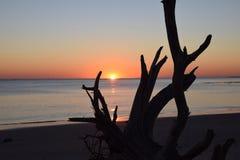 Dawn Breaking über Treibholz Stockfotos