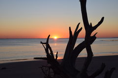 Dawn Breaking sobre a madeira lançada à costa Fotos de Stock
