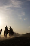 At dawn,camels in the desrt Stock Photos