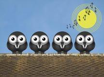 Dawn Chorus Lizenzfreie Stockfotos