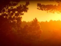 Dawn. A dawn creates comfort at heart Stock Photo