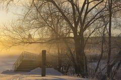 Dawn in de bomen Stock Fotografie