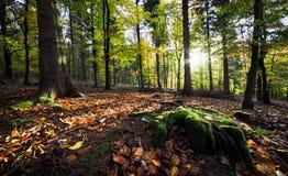 Dawn in de herfstbos Stock Foto