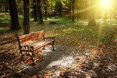 Dawn in de herfstpark Stock Foto