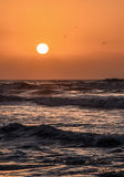 Sunshine delight on the beach Stock Image
