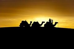 Dawn in the desert Stock Photos