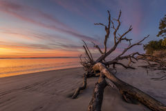 Dawn on Driftwood Beach - Jekyll Island Royalty Free Stock Photography