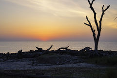 Dawn on Driftwood Beach, Jekyll Island, GA Royalty Free Stock Images