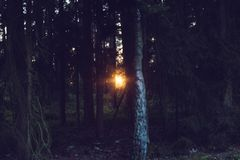 Dawn, Dusk, Forest Royalty Free Stock Photography