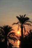 Dawn en palmen Stock Foto's