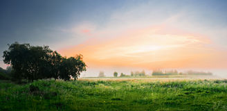 Dawn in a field Royalty Free Stock Photography