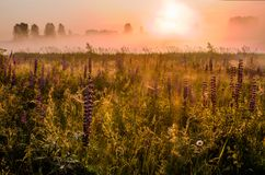 Dawn in the field royalty free stock photography