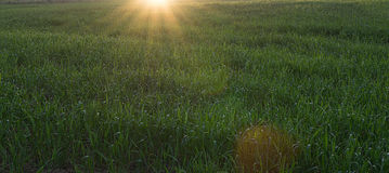 Dawn the field in spring Royalty Free Stock Images