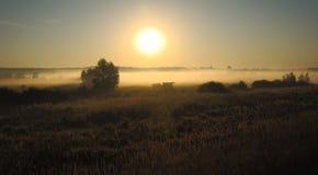 Dawn in a fog Royalty Free Stock Photos