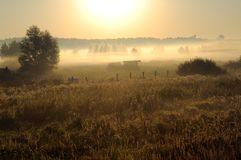 Dawn in a fog Royalty Free Stock Images
