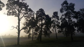 Dawn in a fog. Sunrise nature woods Royalty Free Stock Photo