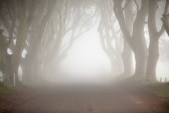 Dawn fog, among trees of Dark Hedges, North Ireland Royalty Free Stock Image