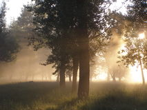 Dawn in the forest. Morning fog dissolves solar rays and creates mysteriousness Royalty Free Stock Photos