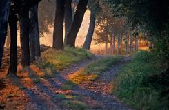 Dawn in the forest. With a path Stock Image