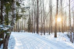 Free Dawn Frosty Morning. Winter Landscape Of Frosty Trees, White Snow And Blue Sky. Tranquil Winter Nature In Sunlight In Stock Photography - 133715002