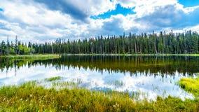Dawn Glow Pond nära Gummilacka Le Jeune nära Kamloops, British Columbia, Kanada royaltyfri fotografi