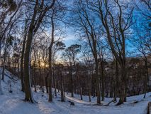 Dawn in the Hermitage. Sunrise in the Hermitage of Braid and Blackford Hill, with trees in the foreground. Crisp snowy morning in January, blue skies and low sun Royalty Free Stock Photography