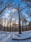Dawn in the Hermitage. Sunrise in the Hermitage of Braid and Blackford Hill, with trees in the foreground. Crisp snowy morning in January, blue skies and low sun Royalty Free Stock Photo
