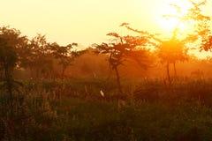 Dawn in het bos Stock Afbeeldingen