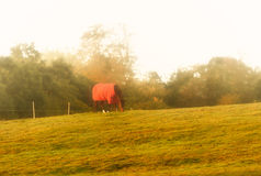 Dawn horse, Foggy Sunrise on winter`s morning. Royalty Free Stock Images