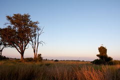 Dawn In Botswana Stock Photos