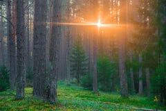 Free Dawn In Magic Woodland Stock Image - 183267301