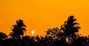 Dawn light coconut tree. Background Stock Photography