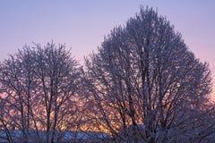 Dawn Light en los árboles Imagen de archivo