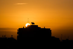 Dawn in Madrid Royalty Free Stock Image