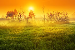 Dawn in a meadow. Landscape, dawn in a field with dead trees Stock Photography