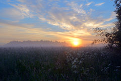 Dawn Meadow Stock Image